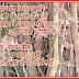 प्यासी इंद्रावती [कविता] - शरद चन्द्र गौड