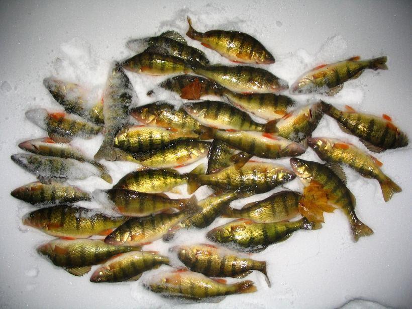 Wisconsin fishing reports ice fishing green bay for Wisconsin fishing tournaments
