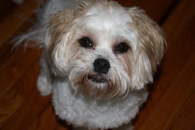Dog Grooming Apron Australia