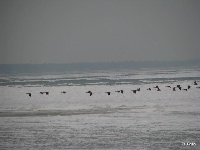 Pl fallin photography saginaw bay ice fishing geese for Saginaw bay fishing