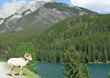 Nesbitt Travels Banff Hot Springs Hotel Ab Canada