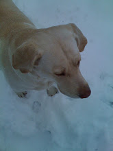 Gracie in the Snow