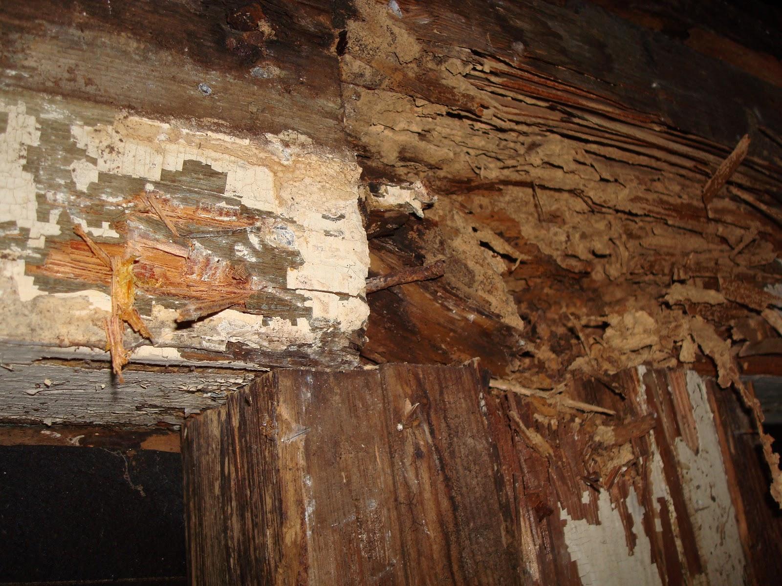 1800's House Renovations: Termite Damage