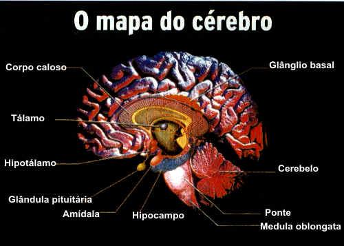 O  mapa do cérebro.