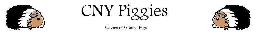 CNY Piggies