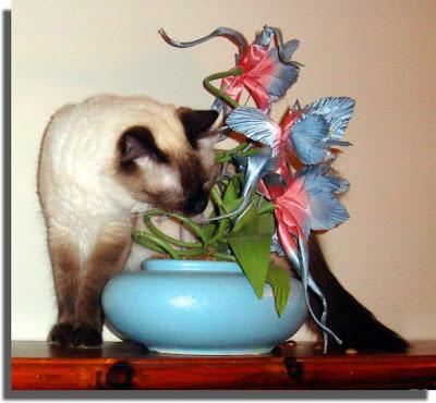 Tawnee and Flowers