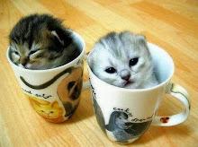 kitty teacups