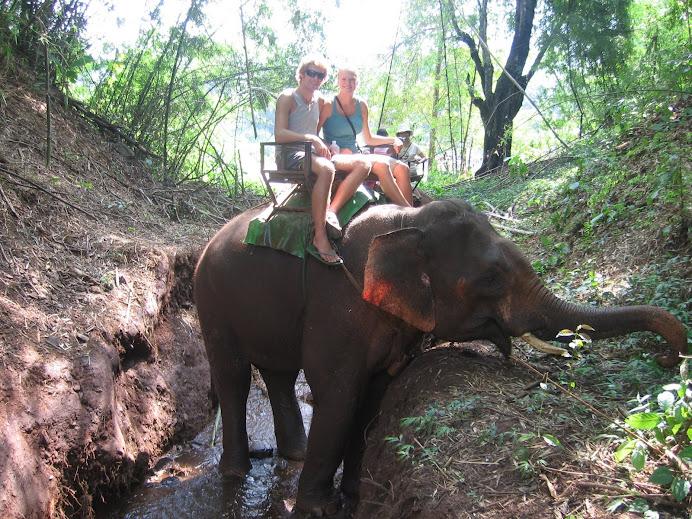 Elephant Trekking!