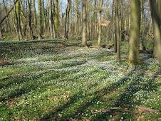 Frühling in Zernikow