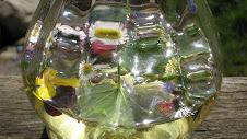 Wildkräuterbowle