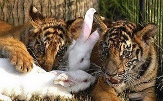 funny animals really cute photo of tiger cubs and bunny rabbit friends