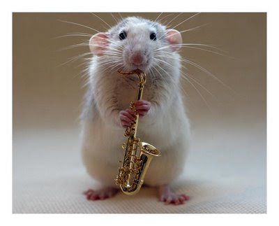 funny crazy animal photos mouse playing saxaphone pic