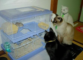 funny cats photo watching hamster in a cage gang