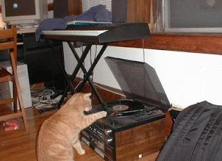 funny cat photo playing tunes on record player