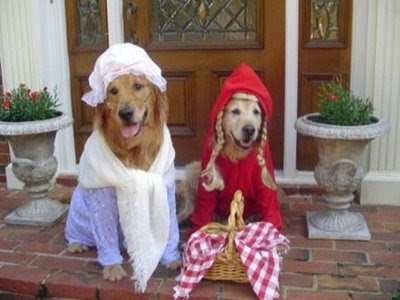 funny pictures of retirver dogs dressed up for photo