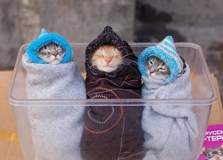 really cute kittens photo three rugged up in a tub gorgeous