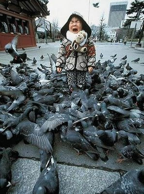 funny bird photos scared kid being attacked by pigeons