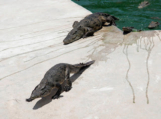 Crocs coming out for lunch