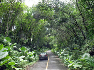 Jungle road in Sirey Island, Phuket