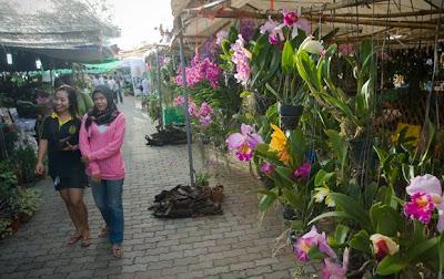 Phuket Flower Fair
