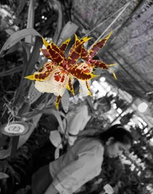 Orchid at Phuket Flower Fair