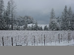 Howell Mountain Winter
