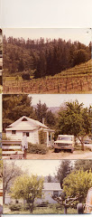 Pine Ridge Vineyards in the Beginning...