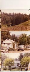 Pine Ridge Vineyards in the Beginning...