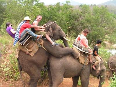Фото порно з слоном фото 693-505
