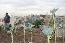 Hortas urbanas