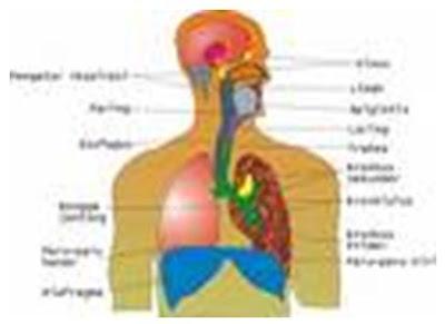 Perawatan Pada  Bronchopneumonia