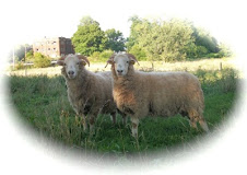 Our Dor Galen Ewes