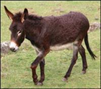 keledai.png