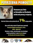 Porzucone psy i koty ze Schroniska we Wrocławiu serdecznie proszą o wsparcie.