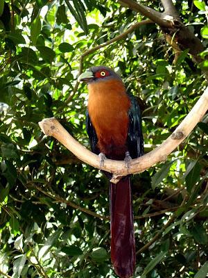 Close up tropical bird