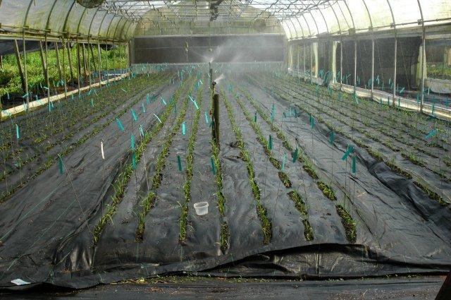 Le petit jardin planting daylily seeds - Petit jardin daylilies argenteuil ...
