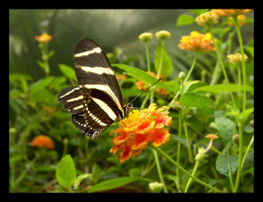 Paisajes Hermosos De Mariposas