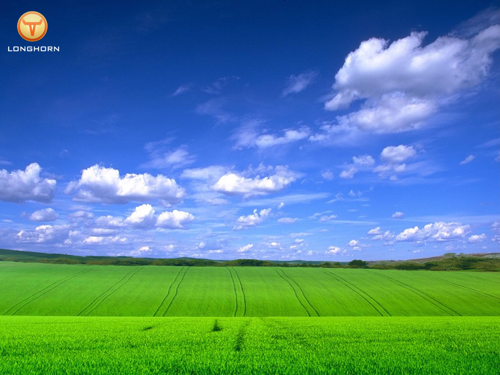 http://3.bp.blogspot.com/_BgkzdqiEW7M/TG6uMelxSkI/AAAAAAAABiU/g0rCiiMFl_Y/s1600/Longhorn_Grassy_With_Blue_Sky_2003.jpg