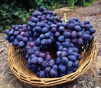 Sonhar com um belo cacho de uvas é sinal de que ventos favoráveis