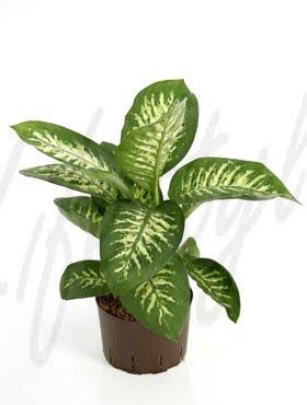 plantas venenosas ii curiosidades animales y plantas
