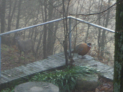Tizia rotta cercapezzi dicembre 2010 for Casa di cura facile arbusti di fronte