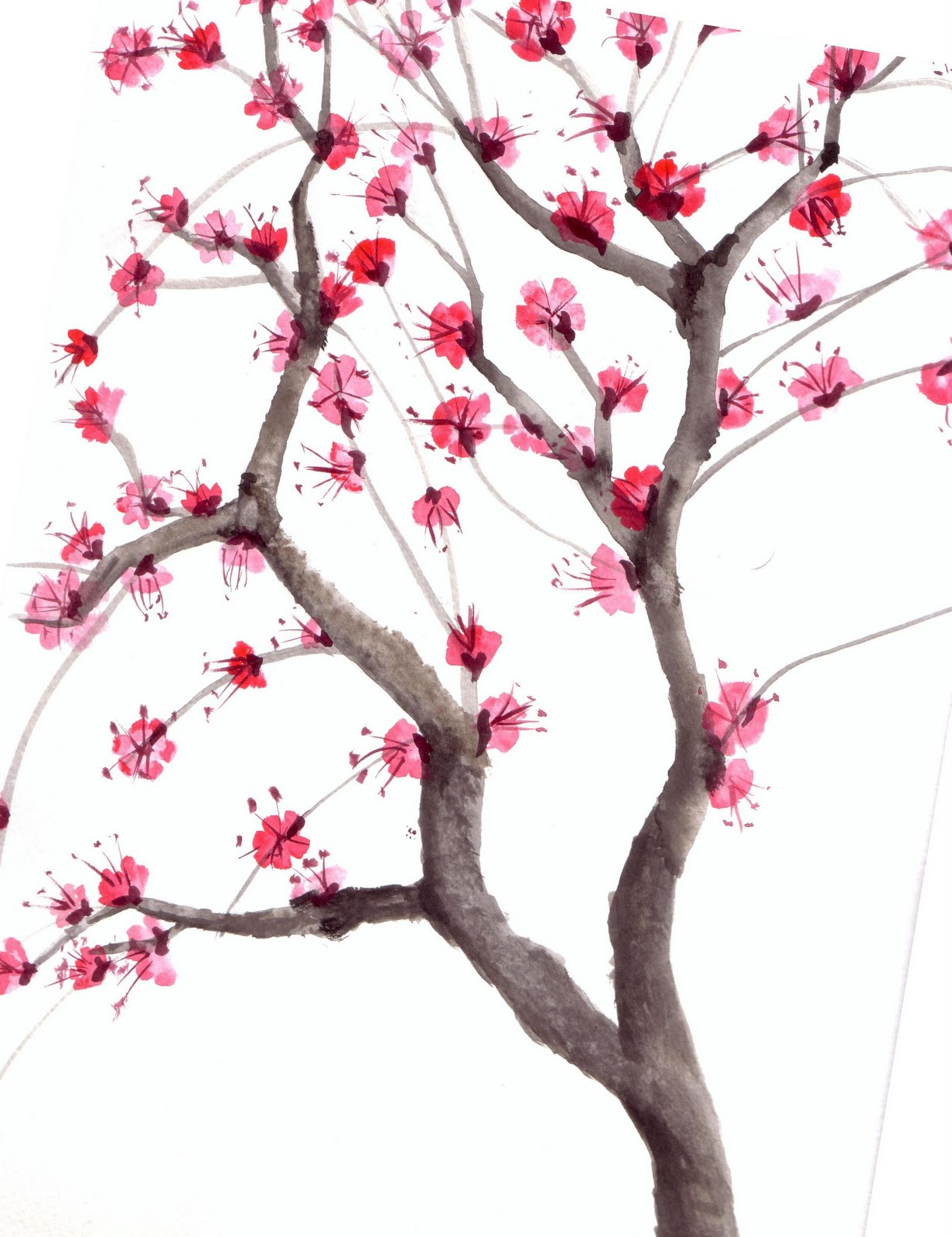 chuzzlewit chinese blossom tree