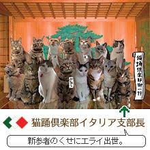 猫踊倶楽部