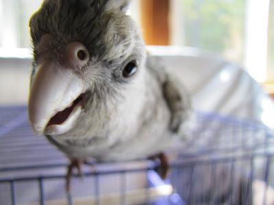 لا-تكن-كالببغاء-التقليد-الببغاوية-نسخة-أخرى-No - not - Parrot - a bird - funny<br />