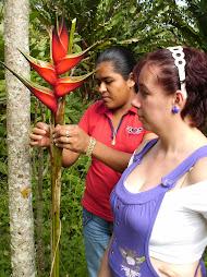 cultivo de heliconias Palicabildo