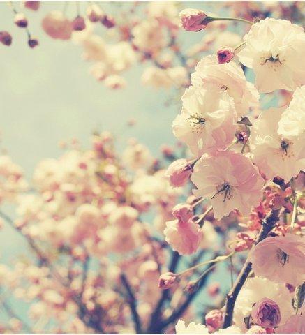 Фото на аву в вк весна