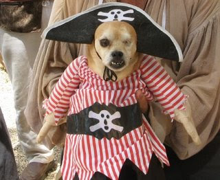 pirate, dog, pirata, perro, disfraz, costume