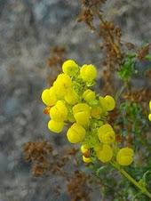 Flora Nativa de Quimavida