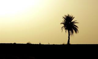 Desert Heart & Failure