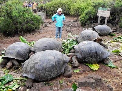 Islas Galápagos, tortugas gigantes